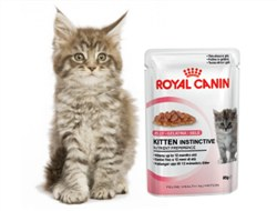 Royal Canin Wet Cat Nutrition